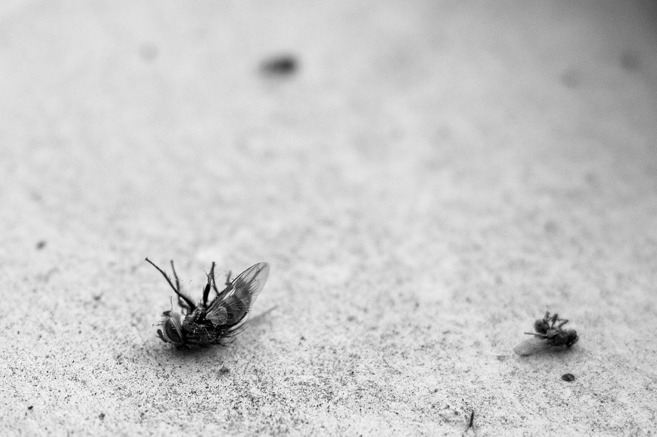 dead insects on ground