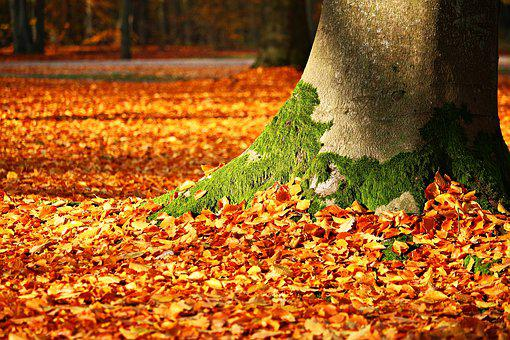 Fall Foliage, Moss, Tree, Autumn, Leaves