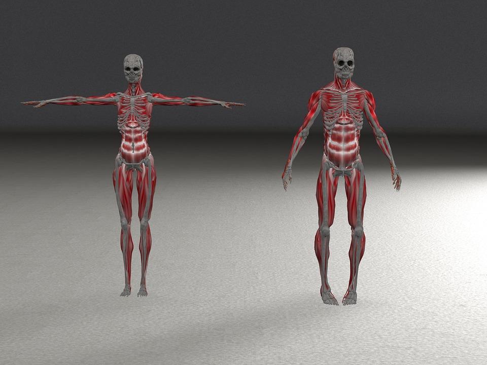 Skelett Mann Frau · Kostenloses Bild auf Pixabay