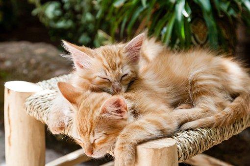 Kittens, Pets, Sleeping, Cats, Animal