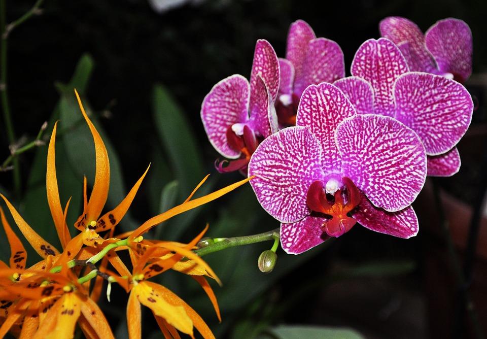 kostenloses foto natur farbe bunte orchidee kostenloses bild auf pixabay 1918193. Black Bedroom Furniture Sets. Home Design Ideas