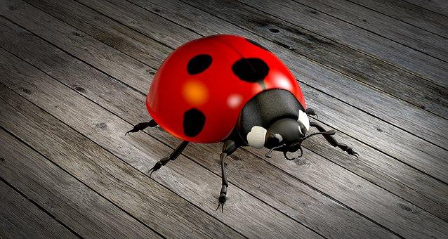 Ladybug, Beetle, Lucky Charm, Nature