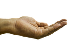 hand, palm
