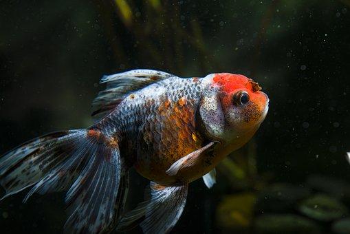 680 Download Gambar Hewan Ikan HD Terbaik