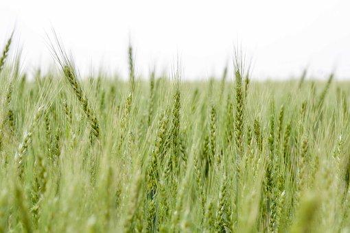 Agriculture, Nature, Plant, Season