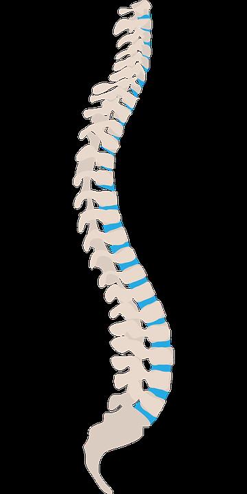 Spine, Spine Side, Health, Side, Medical, Body, Care