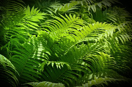 Ferns, Green Stuff, Sunbeam, Fruitful