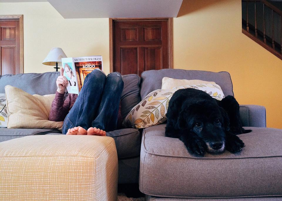 Free photo Person Home Relax Dog Lifestyle Free Image on