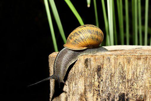 Snail, Animal, Nature, Animals, Shell