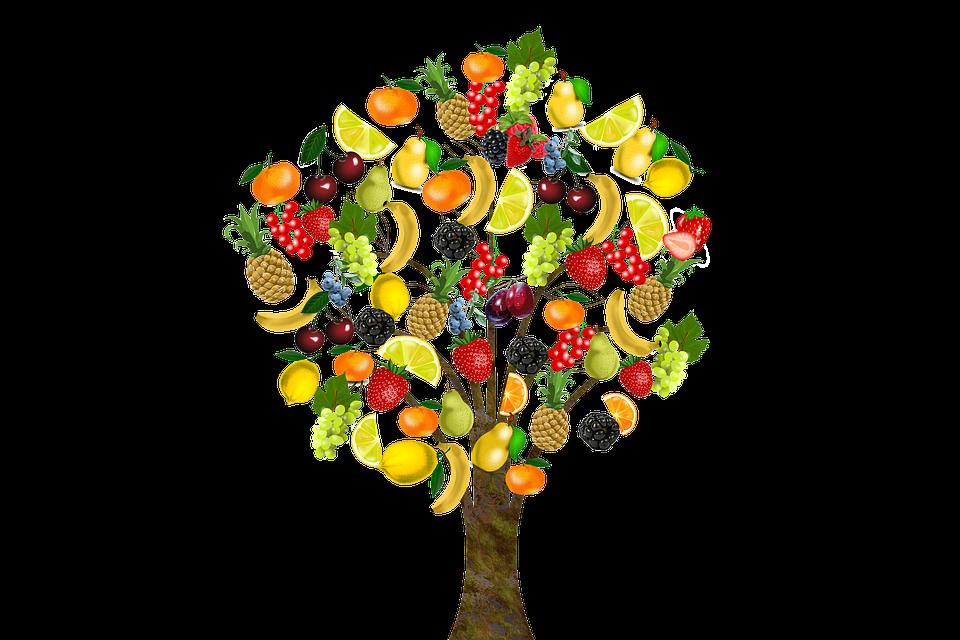 Fruit, Fruit Tree, Health, Vitamins, Cherries, Lemon