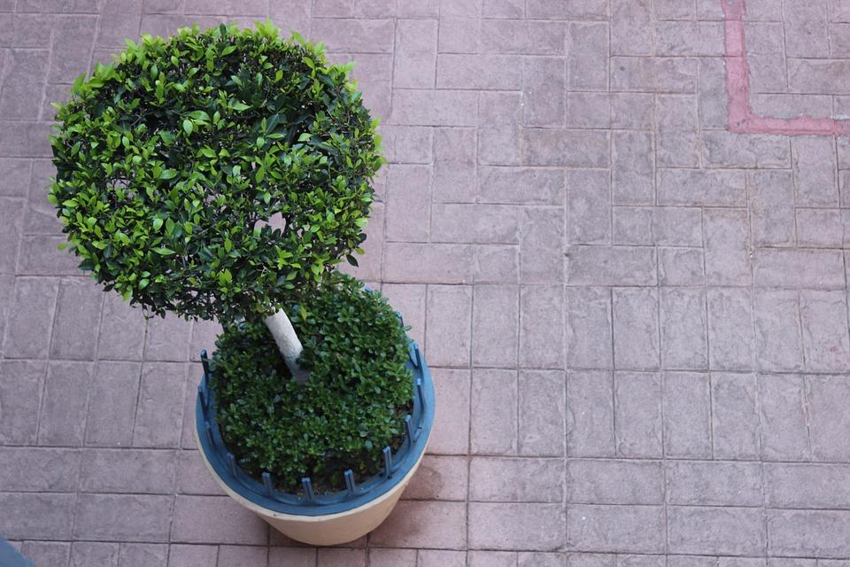 Drzewa Nurkować Doniczka Darmowe Zdjęcie Na Pixabay