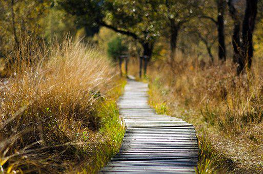 Wooden Track, Web, Away, Nature, Trail