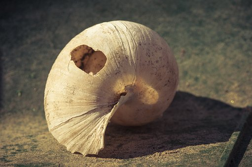 Shell, Broken, Empty, Close, Leave