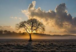 Lone Tree, Tree, Oak, Clouds