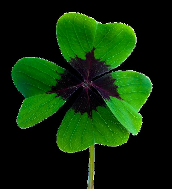 Vierblättriges Kleeblatt Glück