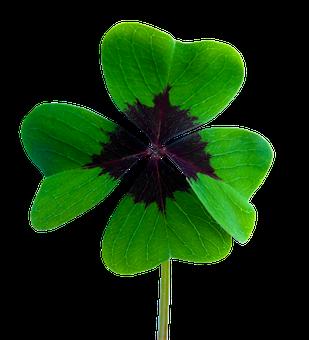 Glück, Kleeblatt, Vierblättrig