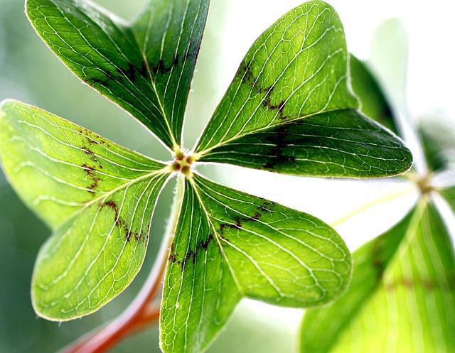 Klee gl cksklee garten kostenloses foto auf pixabay - Garten klee leipzig ...