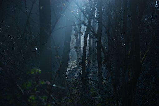 暗い, ムーディー, 怖い, 不気味な, 自然, 林, フォレスト, 森林, 光
