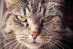 cat, animal, pet