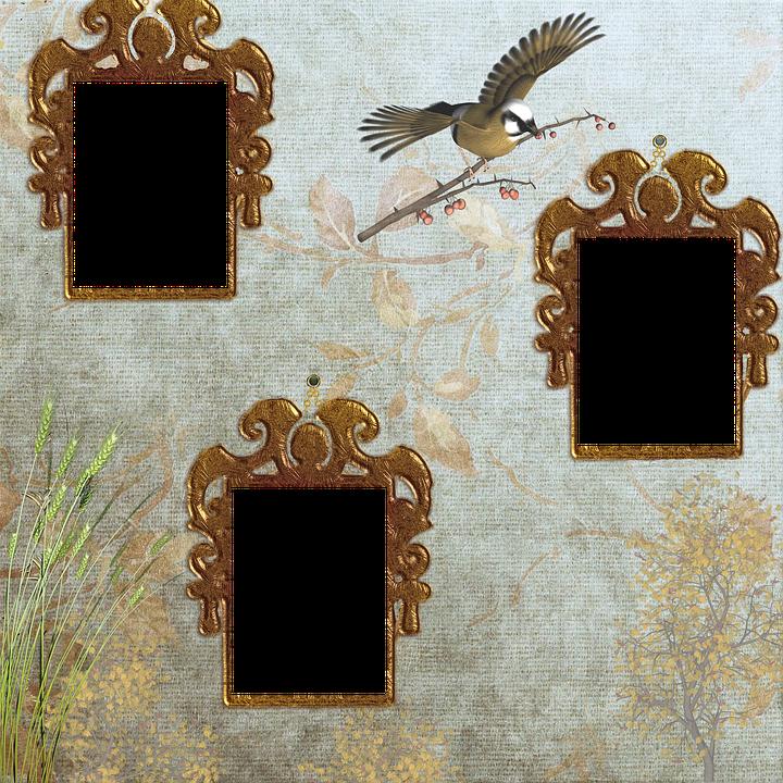 Peaceful Birds Places · Free image on Pixabay