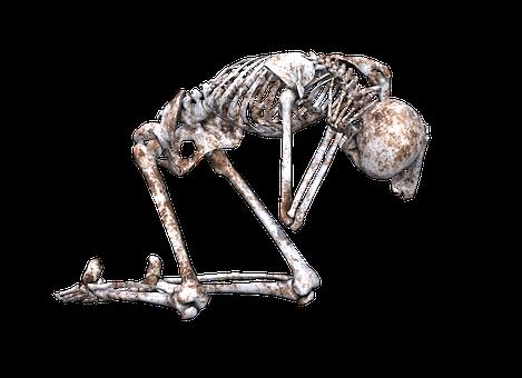 スケルトン, ポーズ, 頭蓋骨, 骨, 3 D, ひざまずいて, Png