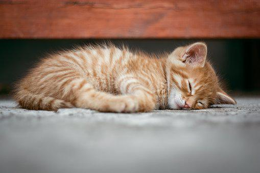 猫, 子猫, かわいい, 眠っている, 眠っています, 赤毛, 赤, ペット