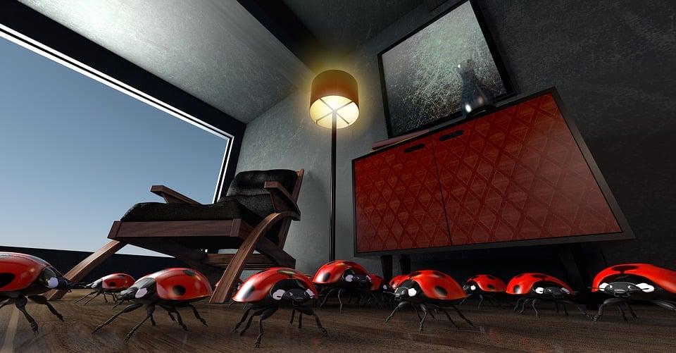 Beetle  Lucky Ladybug  Ladybug  Room  Space  Atmosphere. Free illustration  Beetle  Lucky Ladybug  Ladybug   Free Image on