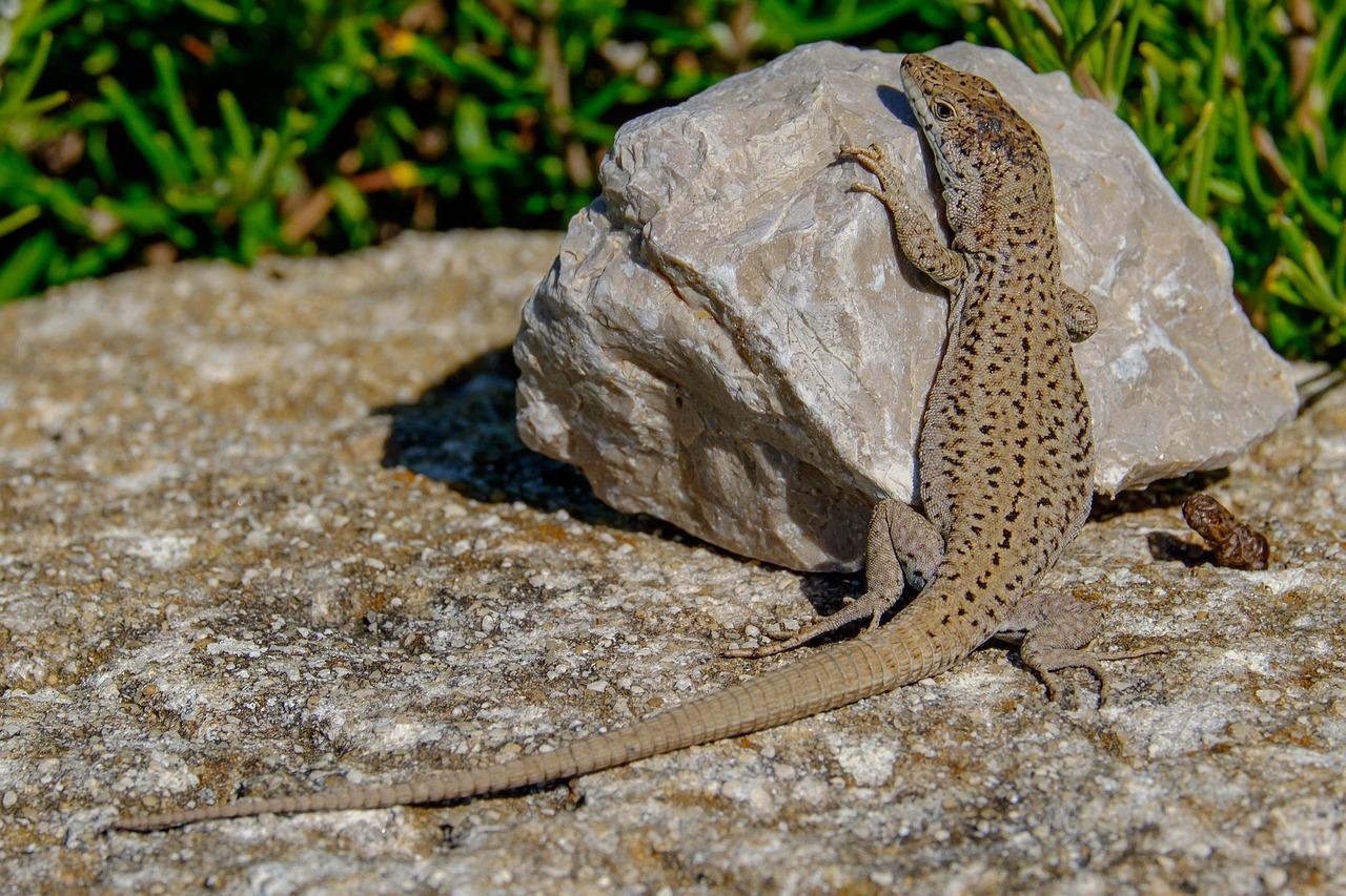пластичность тела картинки внешний вид ящерицы что