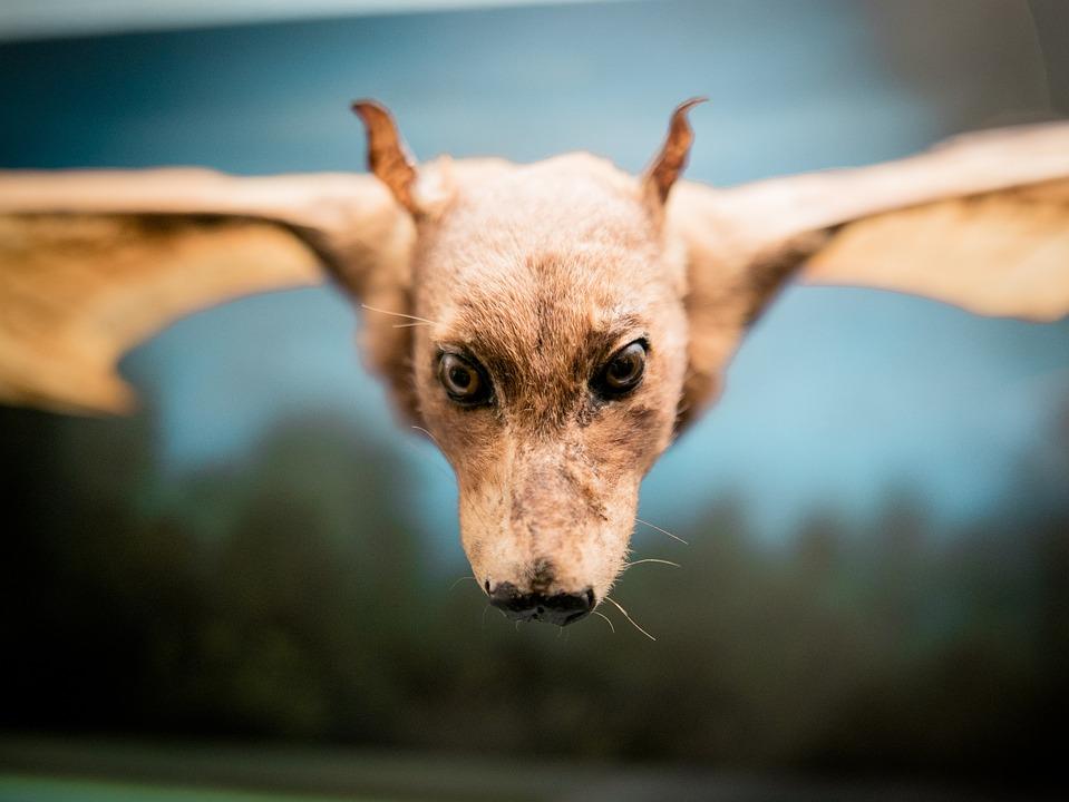 Chien Volant chien volant fledertier tête · photo gratuite sur pixabay