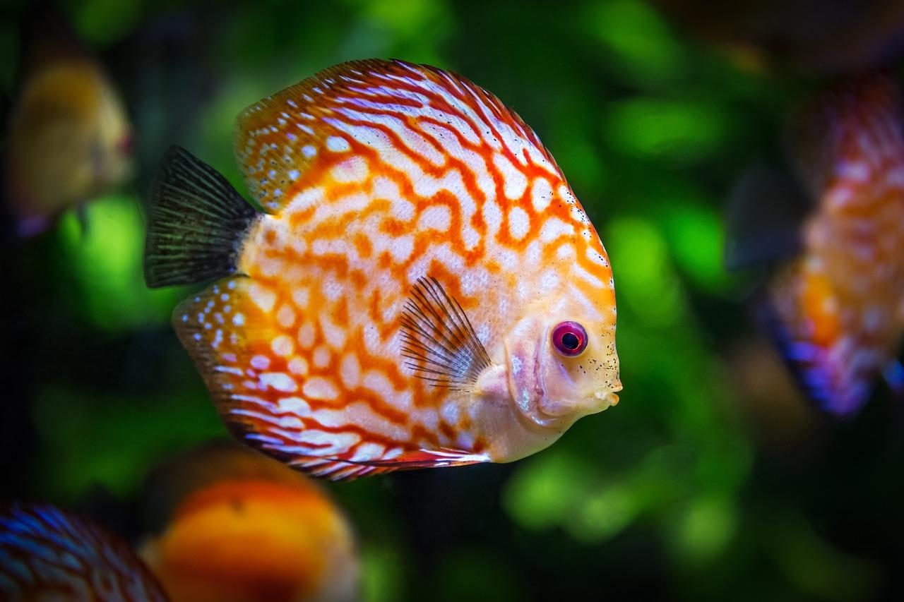 Are fish mammals?