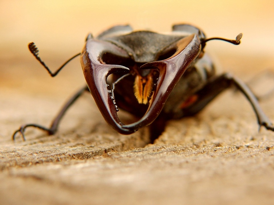 photo gratuite les col opt res animaux insectes image. Black Bedroom Furniture Sets. Home Design Ideas