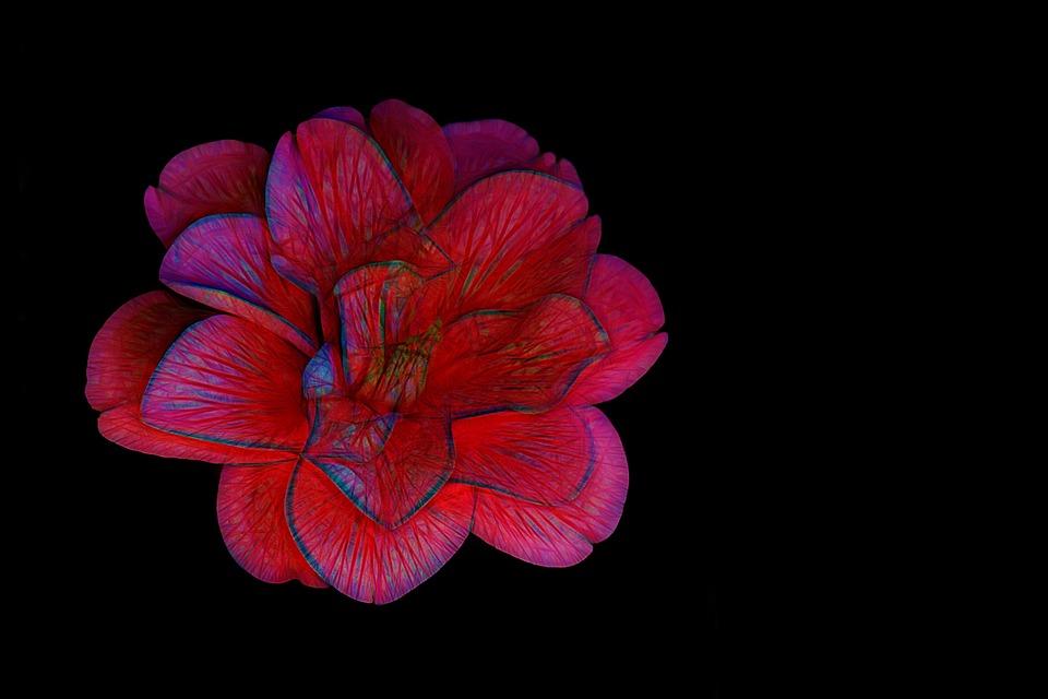 Fiore Rosso Sfondo Foto Gratis Su Pixabay