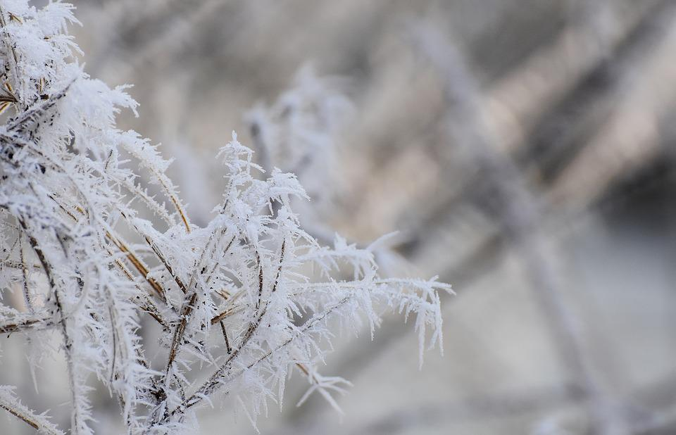 Зима, холод в картинках  Frost-1944563_960_720