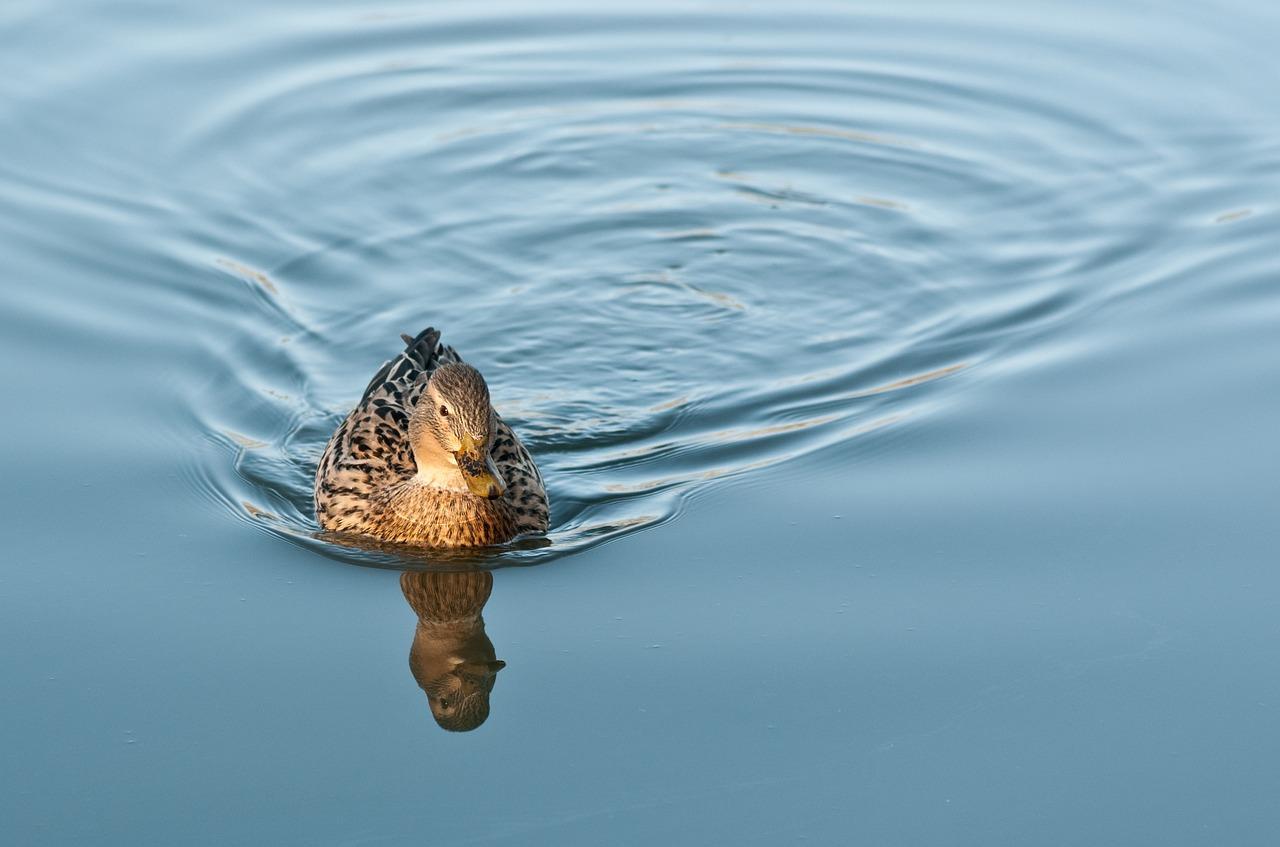 ежик отражение в воде стихи фото здания