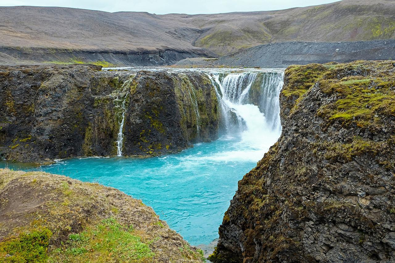 патриот виды исландии фото утконосы