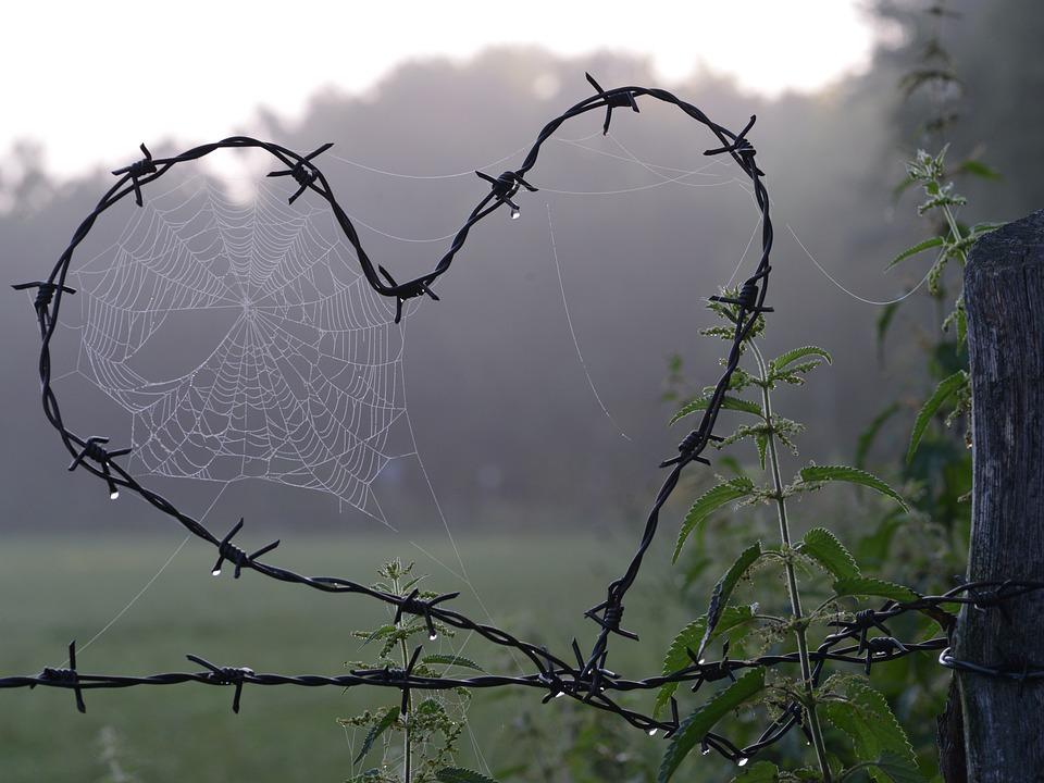 Spinneweb, Hart, Liefde