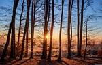 las, krajobraz, słońce