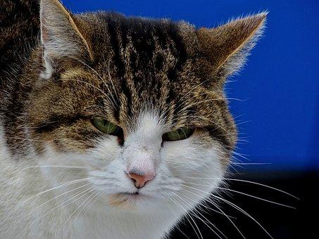 猫, 二日酔い, 不機嫌, 気分, 悪い, 肖像画, 顔, 口ひげ, ひげ