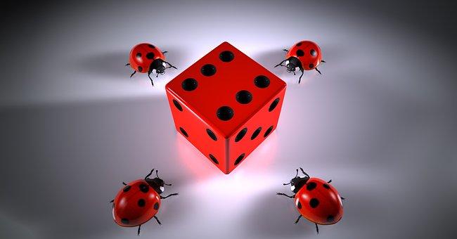 Cube, Lucky Ladybug, Puzzles