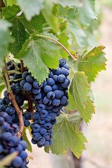 Image result for anggur ungu