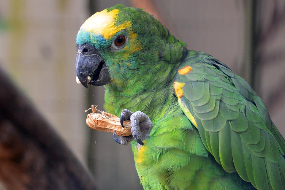 Image result for images of parrots