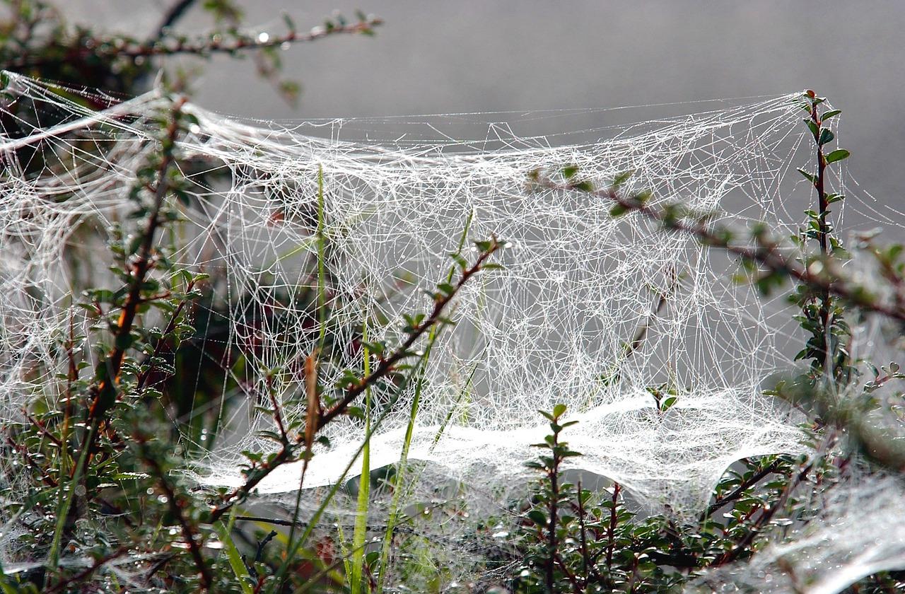 фото зимней паутинки самые великолепные