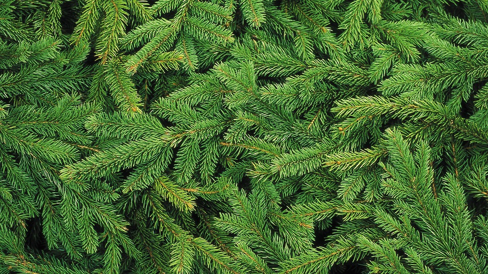 Christmas Tree, Needles, Spruce, Pine, Tree, Forest