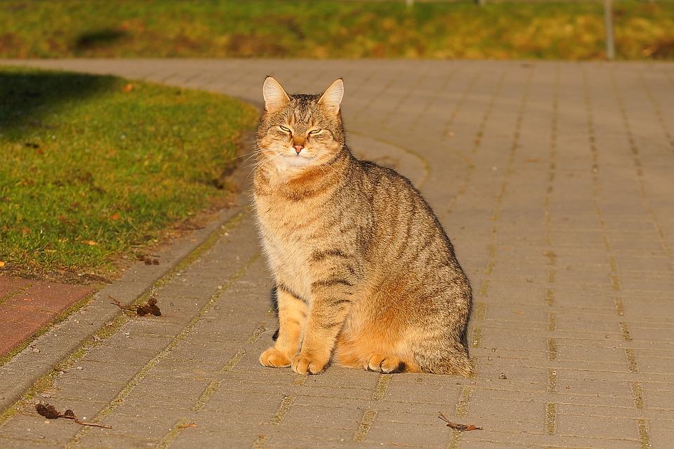 Pekná mačička pics