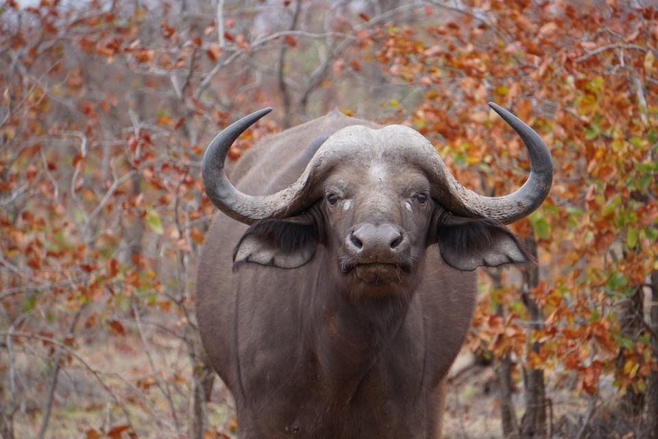 sør afrika dyreliv