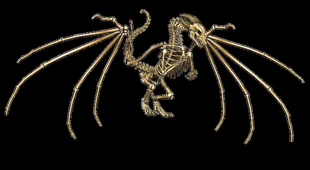Skelett Bilder · Pixabay · Kostenlose Bilder herunterladen