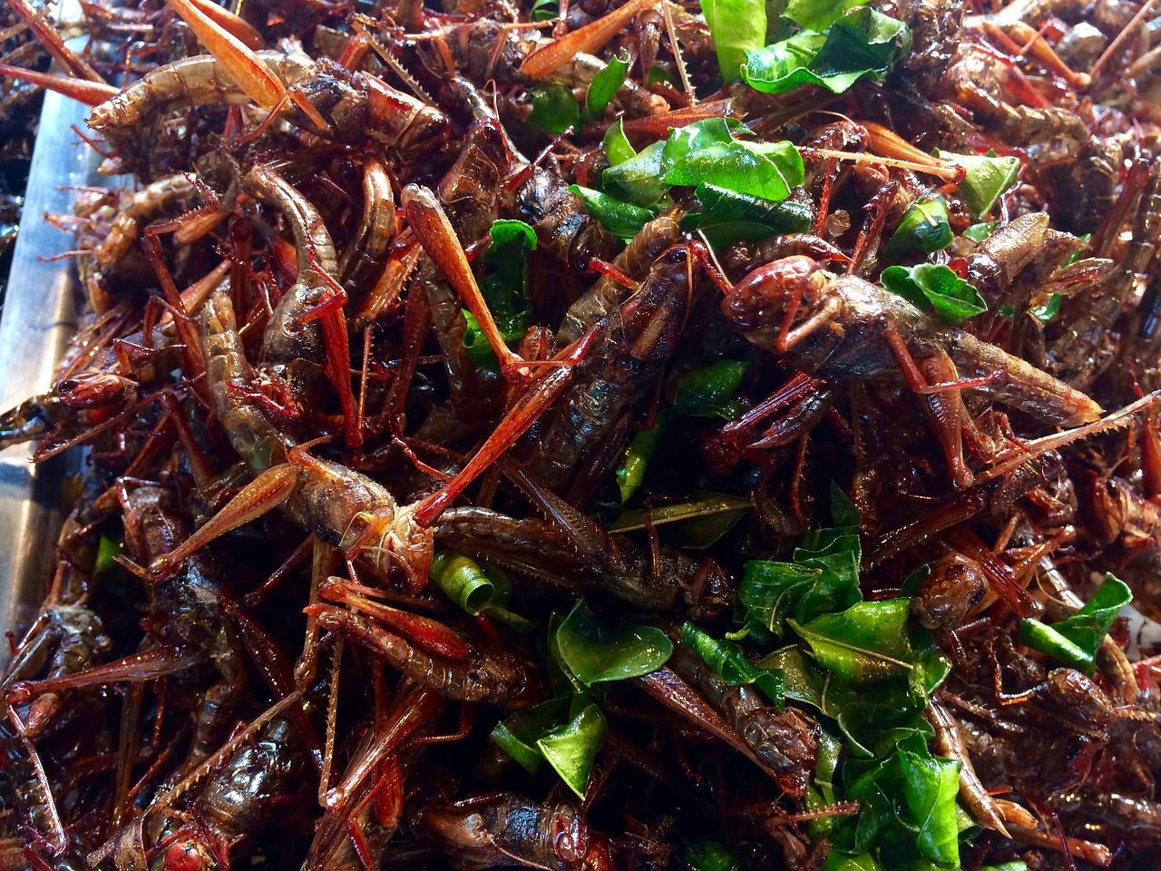 grasshoppers-1958127_1280.jpg