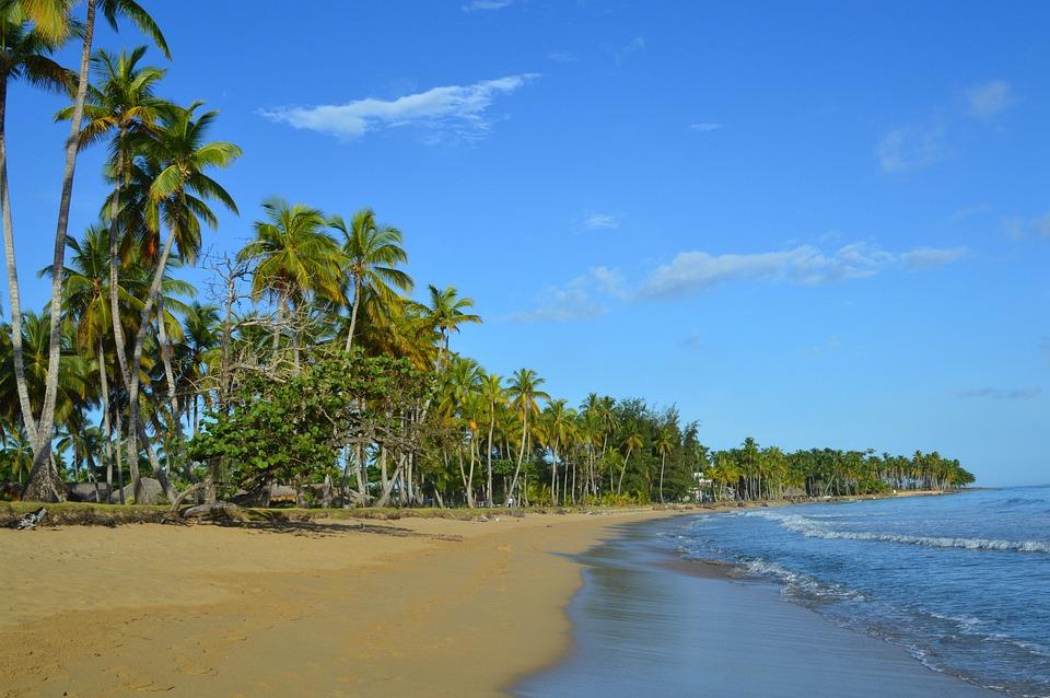 Des Caraïbes, Raisin De Mer, Plage, Las Terrenas