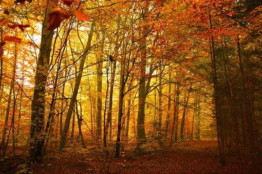 Herbst, Golden, Bäume, Holz, Park, Natur