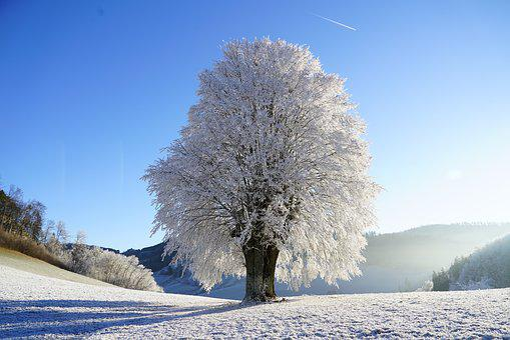 木, 冬の, 霜, 分岐, アイス, 結晶の形成, 雪の